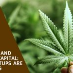 Cannabis and Venture Capital: New Startups are Exploding