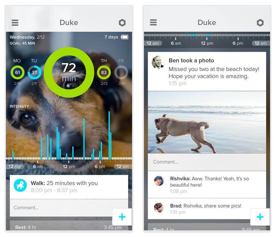dog analytics app whistle
