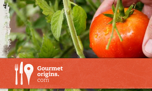 Gourmet Origins